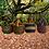 Thumbnail: African Market Basket-Mini