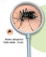 Moustique tigre et lutte anti-vectorielle