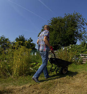 HARP resident with wheelbarrow at allotment