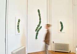 Botanical Wall Installation