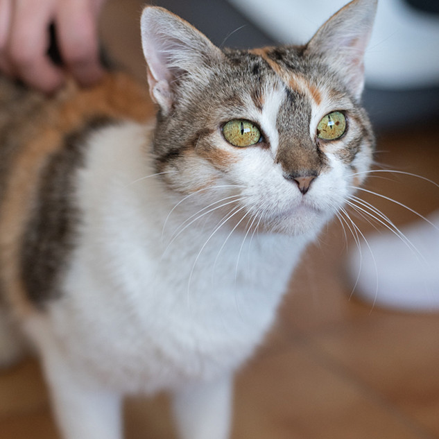 Ruby | Fêmea - 2 anos