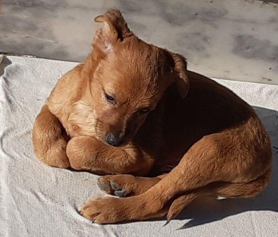 Gaspar | Macho - Nascimento Novembro 2020