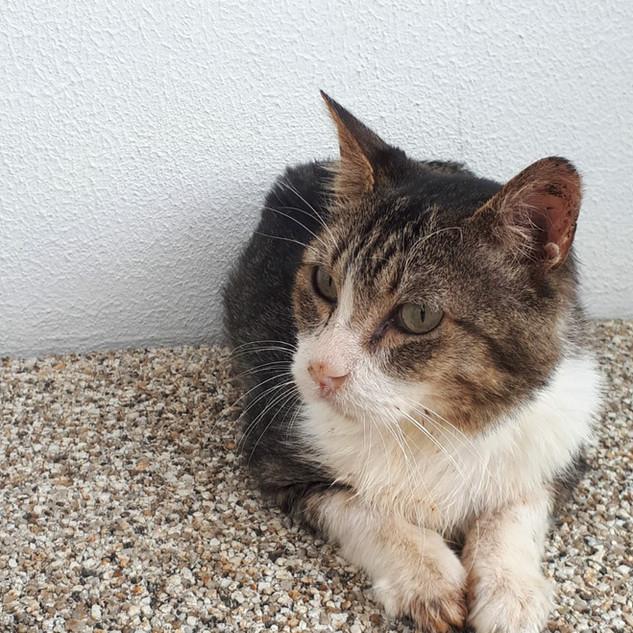 Leo | Macho - 5 anos