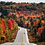 Thumbnail: Fall Cruising