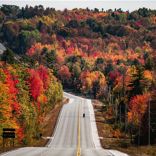 Fall Cruising