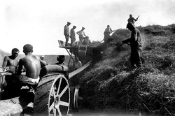 Рабочие молотят пшеницу комбайном.1933.чирчик.jpg