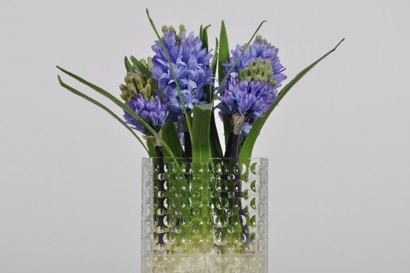 Hyacinth In Glass Jar