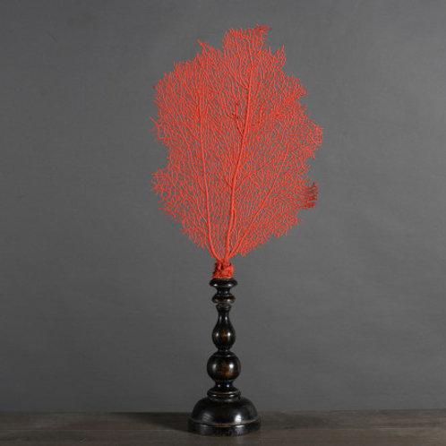 Imperial Red Sea Fan