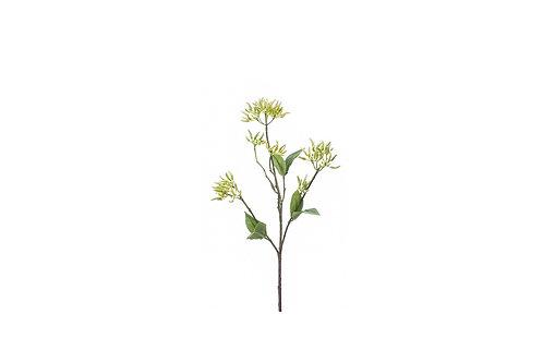 Dogwood seed spray 50cm