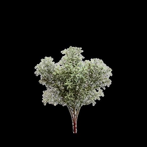 Rosemary Grass Bush