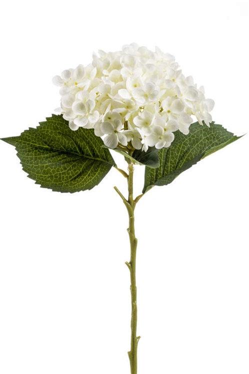 Hydrangea Cream