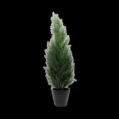Mini Pine Tree 1.5m