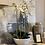 Thumbnail: Phalaenopsis In Bowl