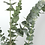 Thumbnail: Eucalyptus Leaf Bunch of 12