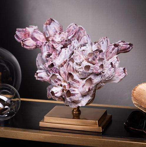 Balanus purple shells on brass stand