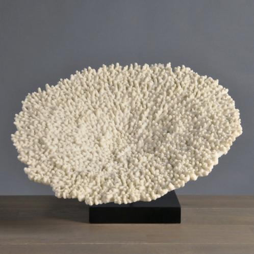 Large Flat Coral Moulding