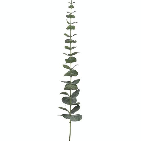 Eucalyptus Leaf Bunch of 12