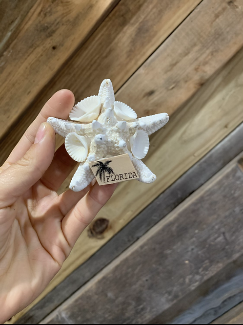Knobby Starfish Magnets (48 pcs)