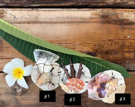 Seashell Collage Magnets (48 pcs assorted styles)