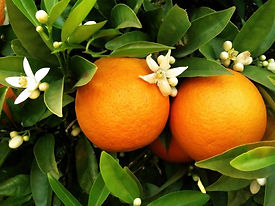 orange-blossom-day.jpg