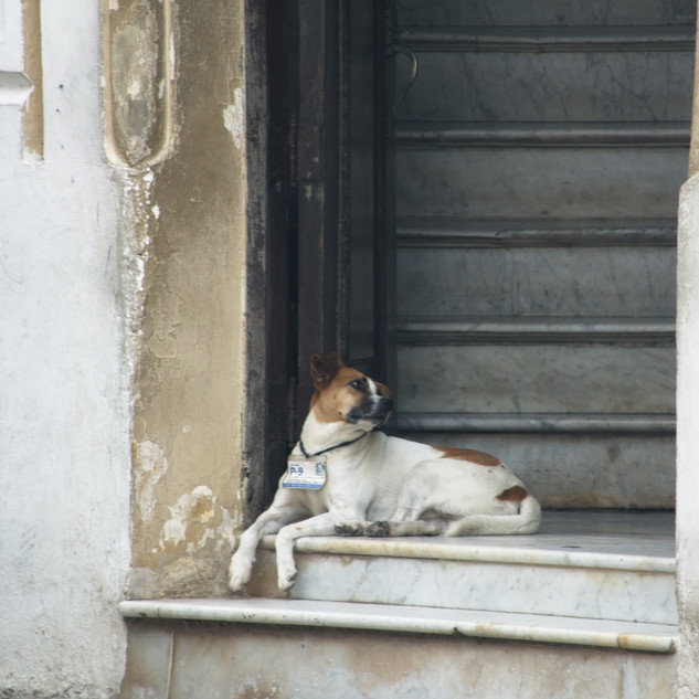 Waiting for his owner