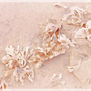 Sand Petals