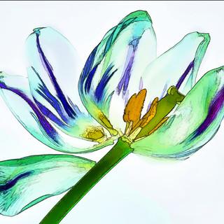 Backlite Tulip