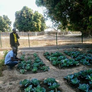 A garden grown by school children in The Gambia