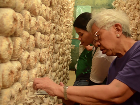 Grandma from Bulacan finds fortune in oyster mushroom and uses it to help others.