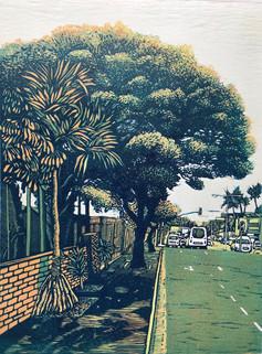 Umgeni Road Tree