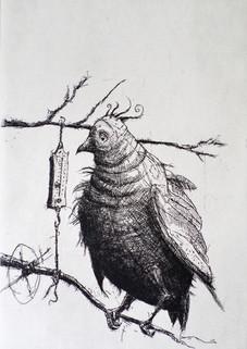 Craig Muller 2014 etching edition 20 image 21 x 15 cm  paper 31 x 28 cm
