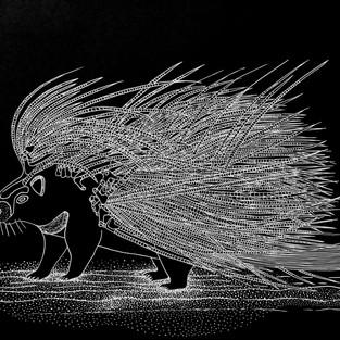 Letha Ndondolo (Porcupine)