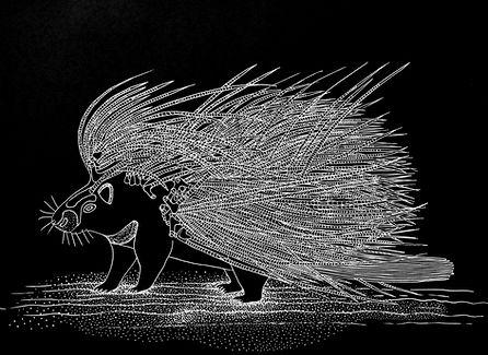 7 Porcupine.jpg