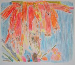 watercolour pencil monotype