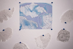 drawings of shells, collaged and turned into digital prints