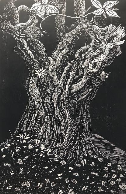 Giba Gorge Tree