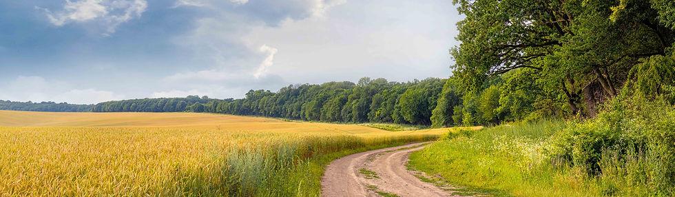 Kansas Wheat.jpg