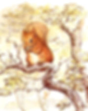 Illustration of a squirrel from the creative commons