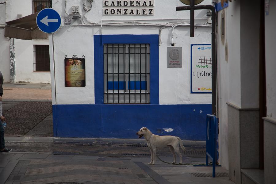 Andalusia-2017 -  21