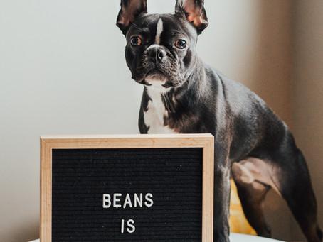Happy Birthday Beans
