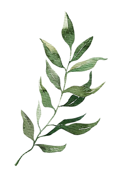 Leaves-26.png