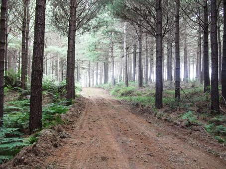 Evolução dos Empregos no Brasil e no Setor Florestal