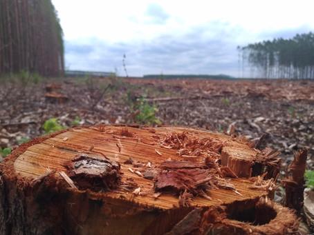 Performance de investimentos florestais no Brasil
