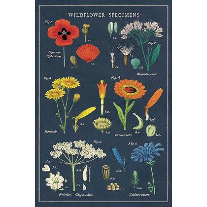 גלוית פרחי בר 5#