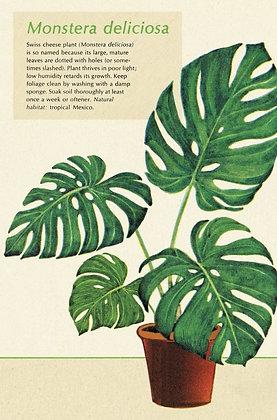 גלוית צמחים 2#