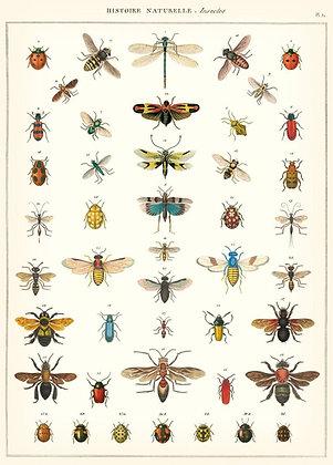 פוסטר חרקים