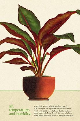 גלוית צמחים 9#