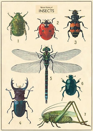 פוסטר חרקים 2#