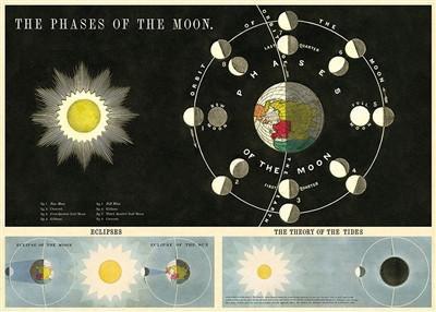פוסטר שלבי הירח