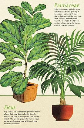 גלוית צמחים 7#